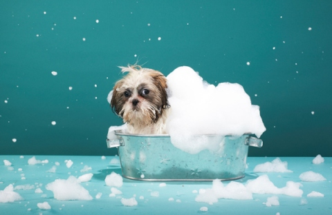 Tips and tricks for dog hygiene routine