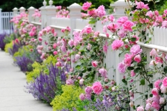 Shabby Chic Garden Decors Picture