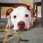 Help your dog prepare for staying in a pet hotel